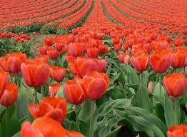 Gömülü Bahar Çiçekleri